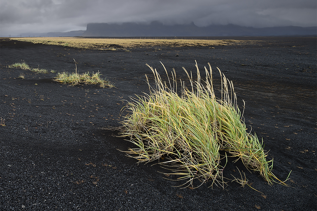 Grasses, South Iceland